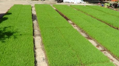 Ma-tham-cho-may-cay-HAMCO-Tien-Giang