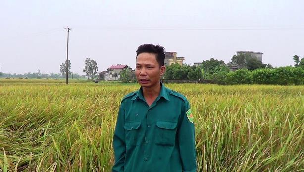 may-cay-lua-HAMCO-gat-thong-ke-tai-Bac-Cuong